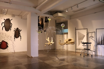 College of Art and Design holds graduate exhibition